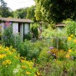 Gärtnern im Schrebergarten – was ist während Corona erlaubt?
