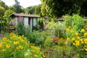 Gärtnern im Schrebergarten - was ist während Corona erlaubt?
