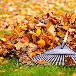 Laub richtig entsorgen – von Laubsäcken bis Kompostieren ist Vieles möglich