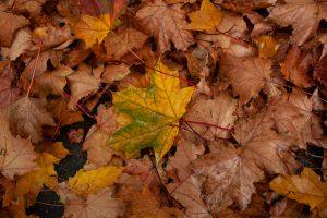 Was ist bei der Beseitigung von nassem Laub zu beachten?